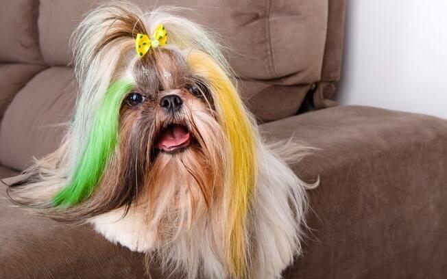 Pintar o pelo do cão pode trazer alergias
