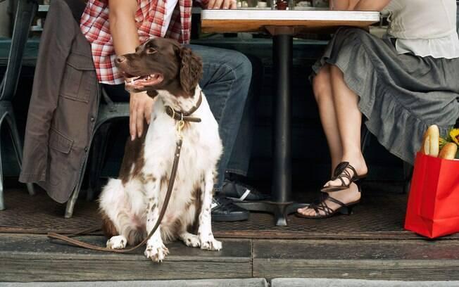 Muitos restaurantes estão se tornando pet friendly