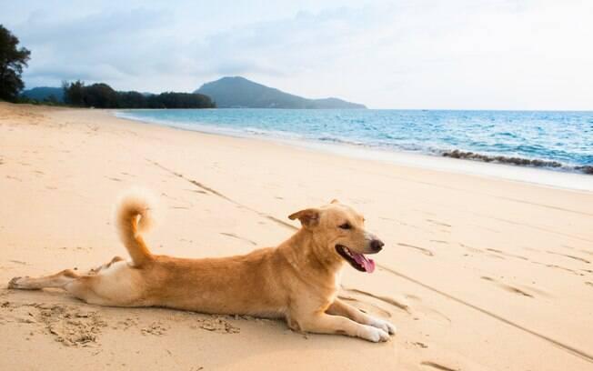 O protetor solar para cães deve ser aplicado sempre que for sair de casa e, se levar o animal em viagem, é imprescindível passa-lo diariamente