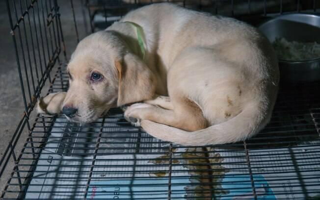 O sangue nas fezes do cachorro é preocupante e afeta a saúde dele