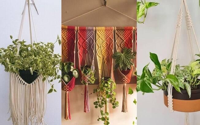 Hangers: saiba quais as plantas ideais para serem penduradas!