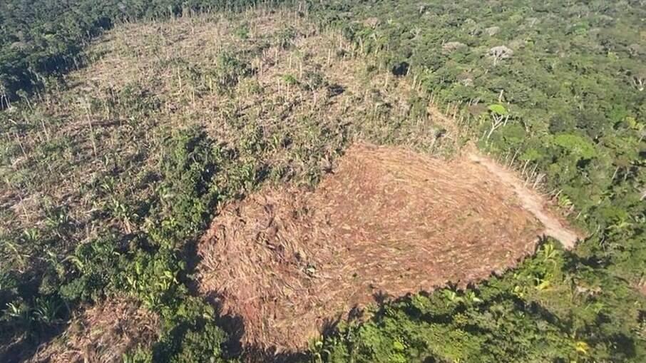 Maio de 2021 foi o mês com maior desmatamento na Amazônia nos últimos cinco anos
