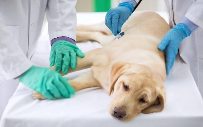 Os animais mais atingidos com esses tumores são os cães idosos machos não castrados