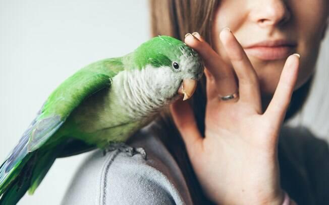 Psitacose é uma doença transmitida pelas aves para os humanos