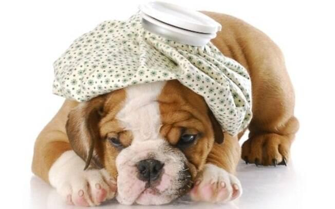 É importante observar o comportamento do pet e os sinais clínicos apresentados para relatar ao veterinário