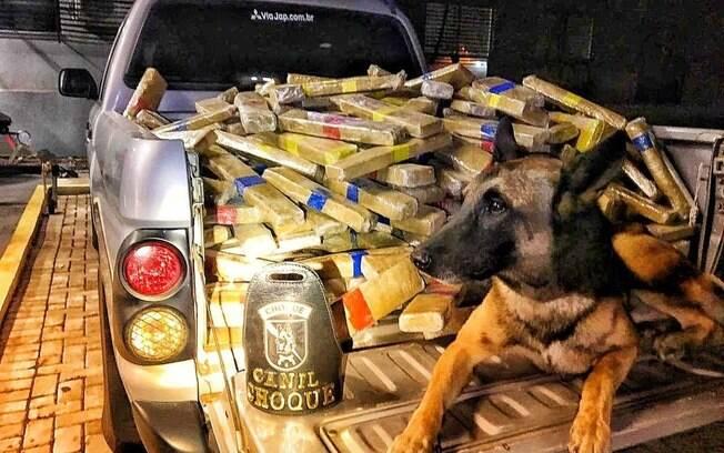 Polícia Federal apreende 600 kg de maconha em caminhão