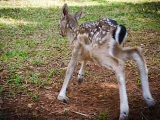 O filhote pesa aproximadamente 4,5 kg