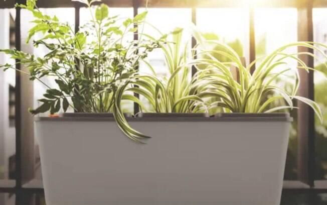 O vaso autoirrigável é uma opção para quem quer praticidade na hora de cuidar das plantas