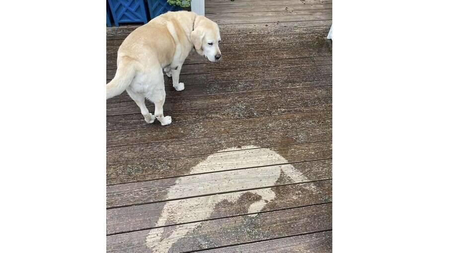 A cachorrinha preguiçosa acabou fazendo uma bela obra artística ao se recusar levantar por causa da chuva