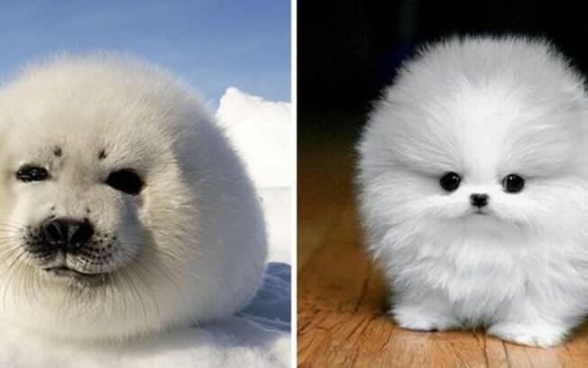 Uma foca e um cachorro bem peludinhos.