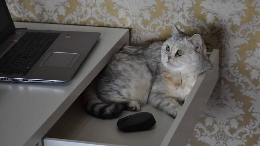 Para o gato, se tem lugar, tem cama