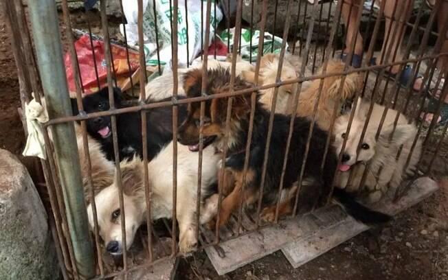 Consumo da cerne de cachorros será proibido na China.