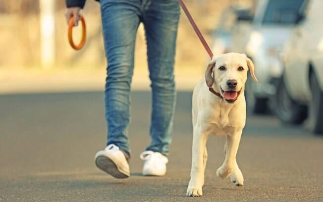Cachorro usando coleira de pescoço