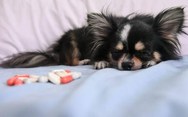 Vitaminas para cachorro são algo para complementar a dieta do animal e não substituir a ração. Consulte o veterinário sobre o uso delas