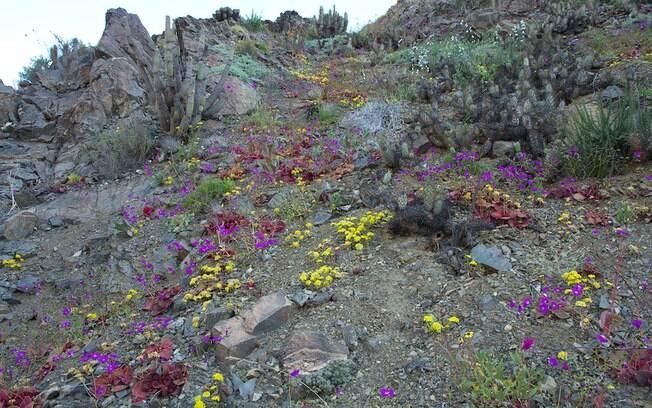 Ano com muitas chuvas ajudaram boa parte das 200 espécies nativas emergir na areia