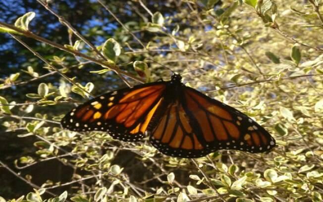 A borboleta conseguiu voar normalmente