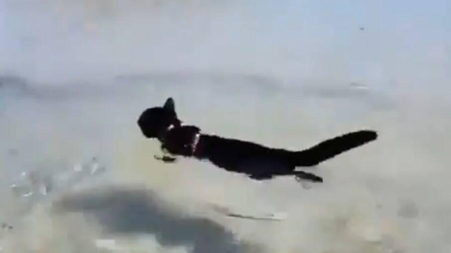 Viraliza vídeo de gatinho nadando
