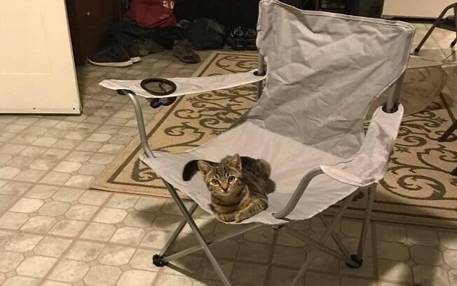 O gato invadiu a casa e ficou sentado na cadeira preferida do morador