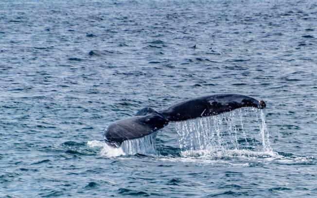 Em Kaikoura, você pode avistar as baleias magnificamente gigantescas