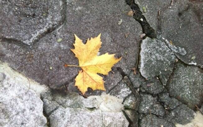 Outono: estação da abundância e da melancolia nos países do norte
