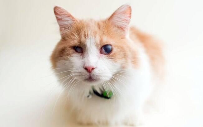 Charlie foi resgatado com outro gatinho de um