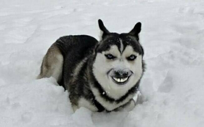 Esses cachorros engraçados vão conquistar seu coração e seu dia