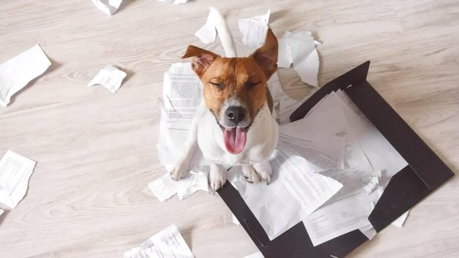 Cachorros são curiosos e podem destruir os mais variados objetos
