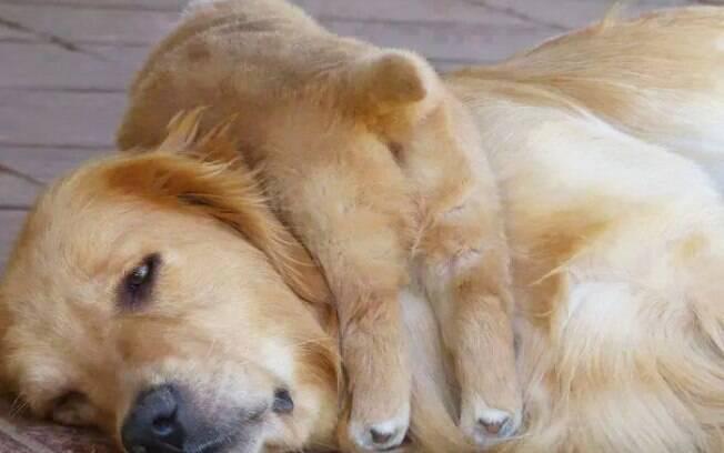Você está cansada? Seu filhote não. Vamos brincar, mãe.
