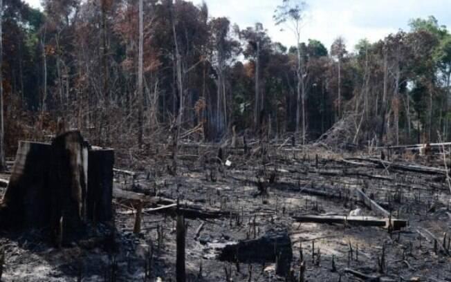 Área completamente desmatada no Estado do Amazonas: índices podem ser ainda maiores