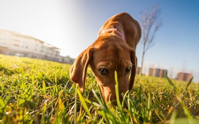 Farejar é um instinto natural dos animais, mas é difícil fazê-lo rastrear algo sem treinamento. É necessário despertar o instinto rastreador que todo canino tem