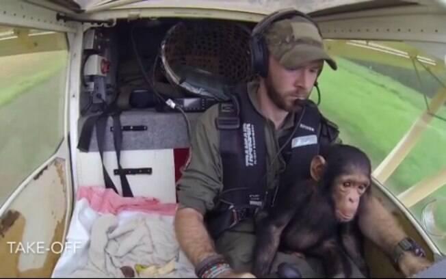 Chimpanzé é resgatado por piloto e é encaminhados para um santuário de macacos