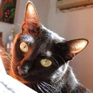 O gato Sebastião foi alvo de piadas dos amigos de sua dona, Ludmilla