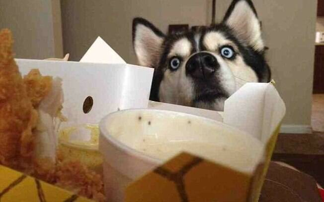 Donos fazem flagrante e registram com fotos engraçadas do seus animais pedindo comida