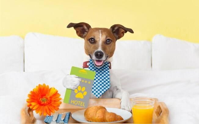 Hotel para pets é uma ótima opção para hospedar o seu animalzinho, saiba como escolher