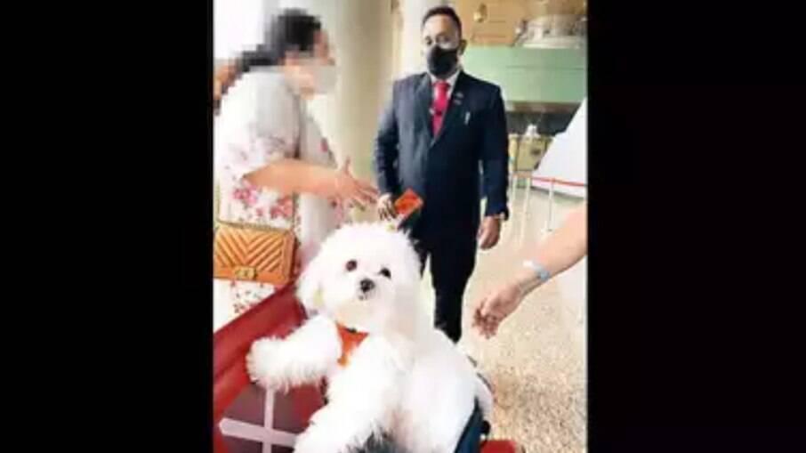 Única imagem registrada do cãozinho