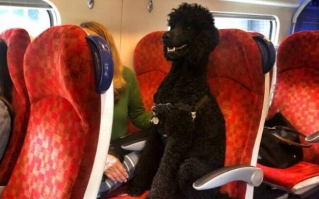 Foto de poodle viajando de trem causa polêmica nas redes sociais