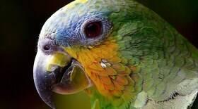 Papagaios exigem atenção especial quando domesticados
