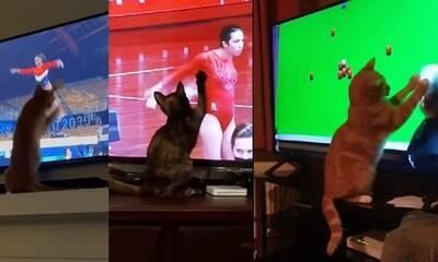 Gatinhos assistindo aos Jogos Olímpicos viralizam nas redes