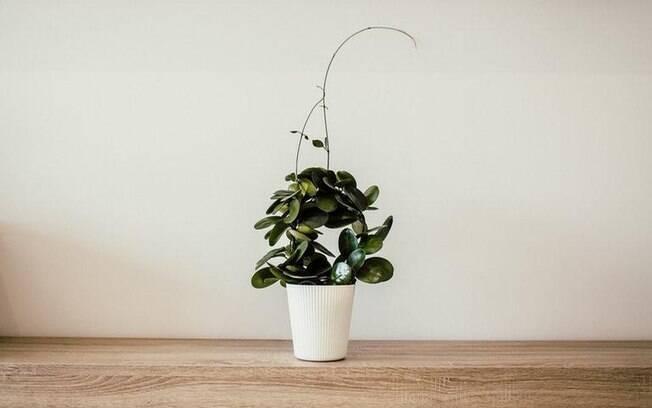 Menos  mais: Estilo de vida minimalista