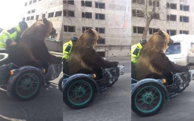 Urso negro foi flagrado andando de moto na Rússia