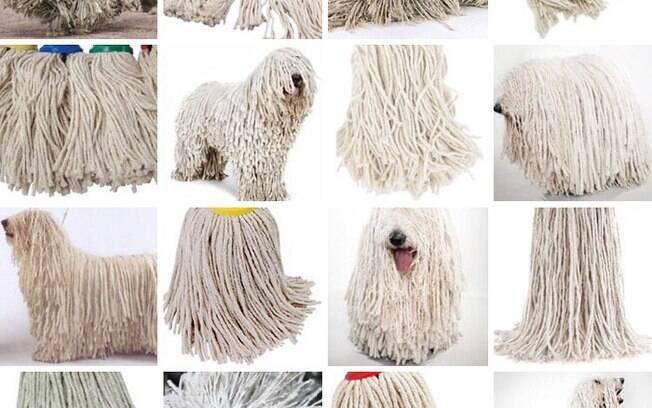 Cachorro ou esfregão