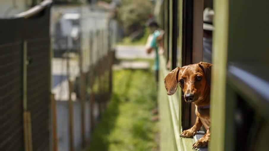 Viagem de trem com pets