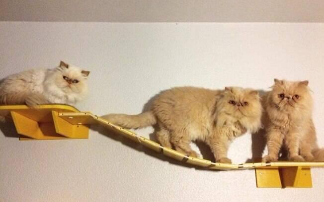 Caroline sempre busca entreter seus gatos