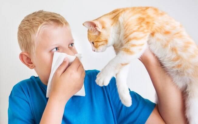 Shampoo seco promete combater alergia a gatos