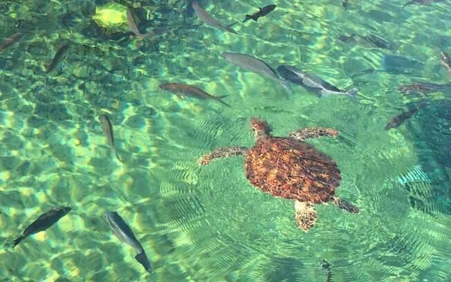 Tartarugas são o símbolo das Ilhas Cayman, então não podia faltar um local voltado para a preservação delas