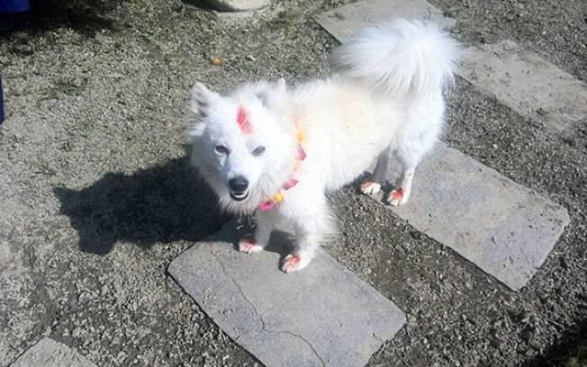 Cachorro em festival no Nepal.