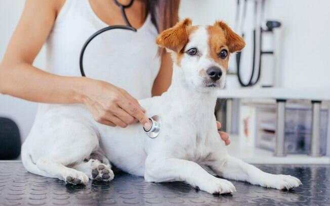 Diferente do coronavírus,há doenças que cães e gatos podem transmitir a nós