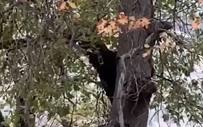 Imagens foram compartilhadas por funcionários do Parque Nacional Yosemite, nos EUA