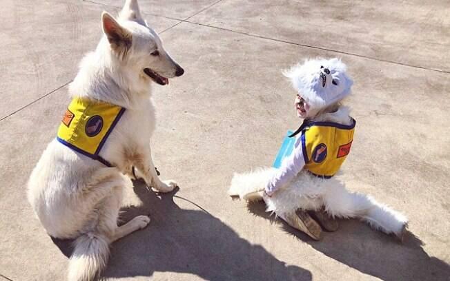 Menina se fantasia de cão guia em evento da escola e abre discussão sobre a importância desse animais
