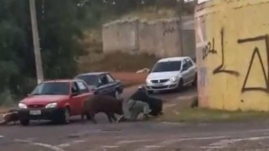 Porco ataca entregador em SP; ele teve de levar 14 pontos próximo às nádegas